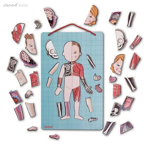 Układanka magnetyczna Ciało człowieka